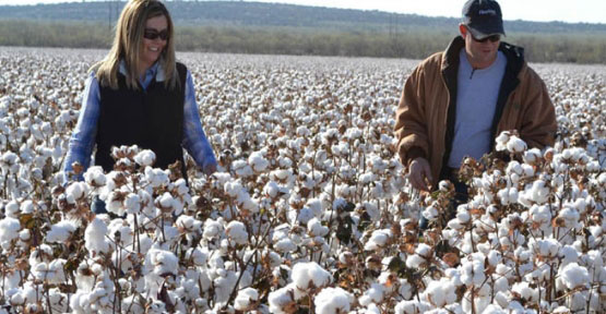 bayer_cropscience_launches_e3_sustainable_cotton_program_h242