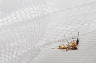 How Specials Fibers are Helping to Combat Malaria?
