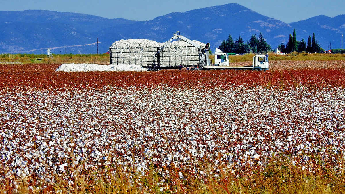 Greece joins the Better Cotton Initiative